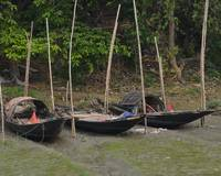 Three Indian Style Boats Parked on Hooghly River