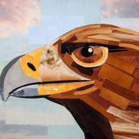 The Serious Grin of the Eagle Art Prints & Posters by Megan Coyle