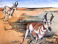 Antelope on the Run