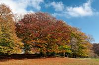 Beautiful and colorful trees in the Canfaito park,