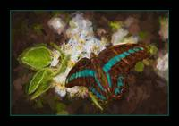 img_5407PS butterfly impasto painting teal border