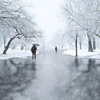 Winter in McAren Park Brooklyn Art Prints & Posters by Nina Bradica