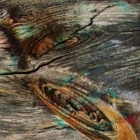 Wid Wood Art Prints & Posters by Jim Bavosi