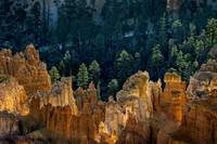 Hoodoos At Daybreak At Bryce Canyon National Park