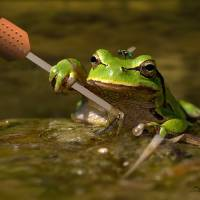Frog Perspectives by I.M. Spadecaller