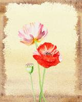 Poppy Flowers Botanical Decor