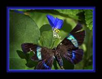 IMG_3096 Butterfly Photo Art Blue Border