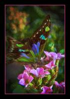 img_5235PS butterfly impasto paint pink border
