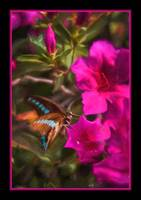 5445PS butterfly painting impasto duo pink border
