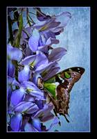 img_5710PS butterfly flower painting blue border