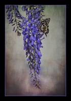 img-5681 butterfly on wistera painting