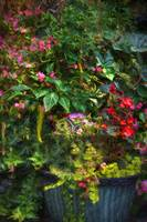 img_8648PS impasto paint flower mix