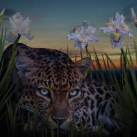 Leopard Stalking by I.M. Spadecaller