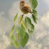 Bird in Birch Tree by I.M. Spadecaller