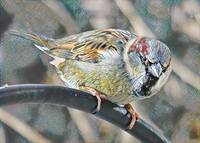 House Sparrow in Mosaic