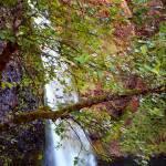 Horsetail Falls, Columbia Gorge