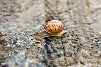 Snail in a Bike Trail