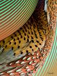 Fins & Feathers Abstract by spadecaller