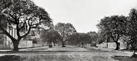 oak_oaks_Alice-12th-street_sep-p by WorldWide Archive