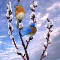 Bluebirds Singing a Song by I.M. Spadecaller