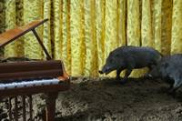 Wild Boars Rooting Around for Music