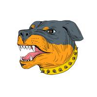 Rottweiler Guard Dog Head Aggressive Drawing