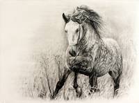 White horse in charcoal