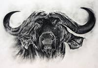 Big buffalo in charcoal