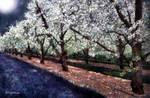 Bridal Veil Trail by RCdeWinter