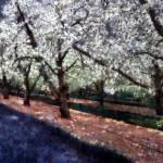 Bridal Veil Trail