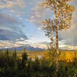 """Wrangell St Elias Tree"" by PaulHuchton"