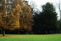 Autumn Trees 1 Landscape Photograph