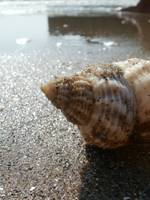 Shell And Sand Macro Landscape Photograph
