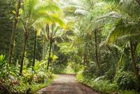 Tropical Country Road