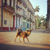 Havana Dog in Morning Light Art Prints & Posters by Lorraine Boogich
