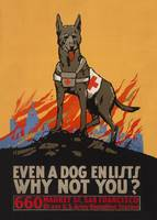 Even a dog enlists WWI