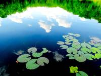 Clouds with lilly pads