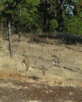 Just Visiting Deer Spokane