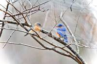 The Bluebirds of Happiness