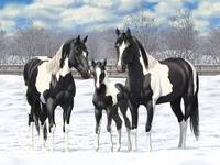 Black Paint Horses In Snow