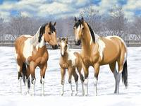 Buckskin Paint Horse Family In Snow