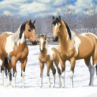 Buckskin Paint Horse Family In Snow Art Prints & Posters by Crista Forest