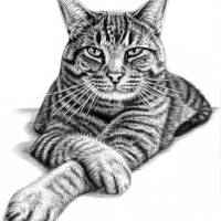 The Pasha Cat Art Prints & Posters by Nicole Zeug