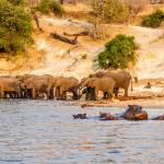 Chobe River Scene
