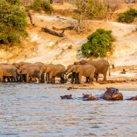 Chobe River Scene Art Prints & Posters by Mark and Judy Coran