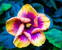 Yellow and Purple Flower - Color - High Res