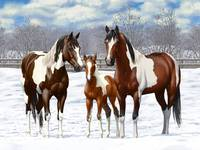 Bay Paint Horses In Snow