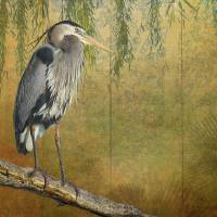 heron on goldleaf by r christopher vest