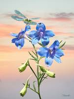 Blue Delphinium and Dragonfly