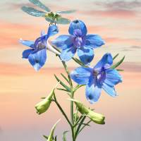 Blue Delphinium and Dragonfly by I.M. Spadecaller